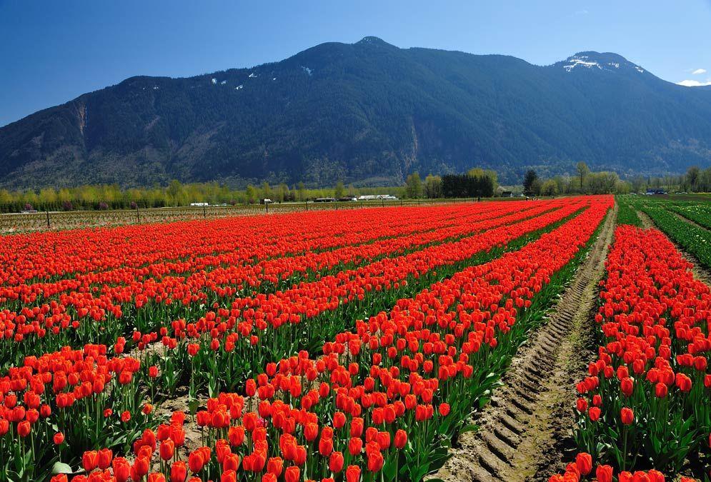 Gulmarg- Meadow of Flowers