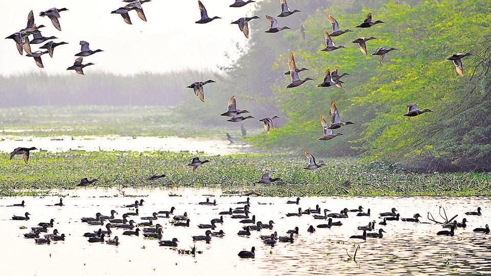 bird sanctuary okhla