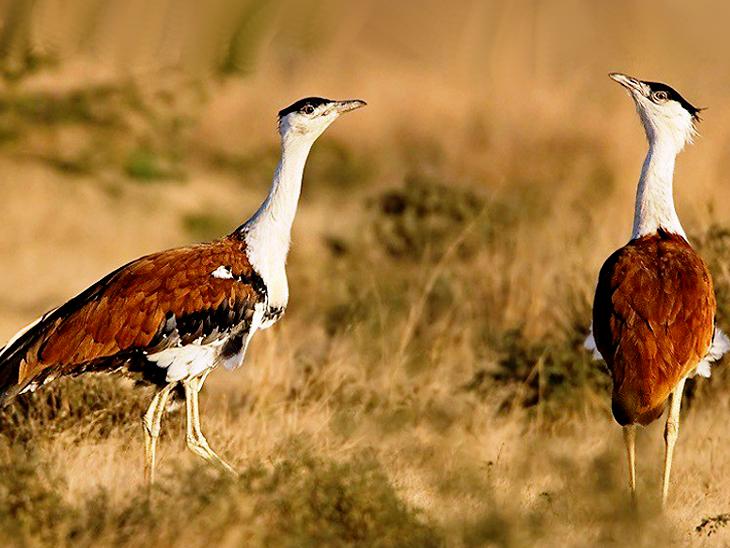 Ghatigaon Wildlife Sanctuary