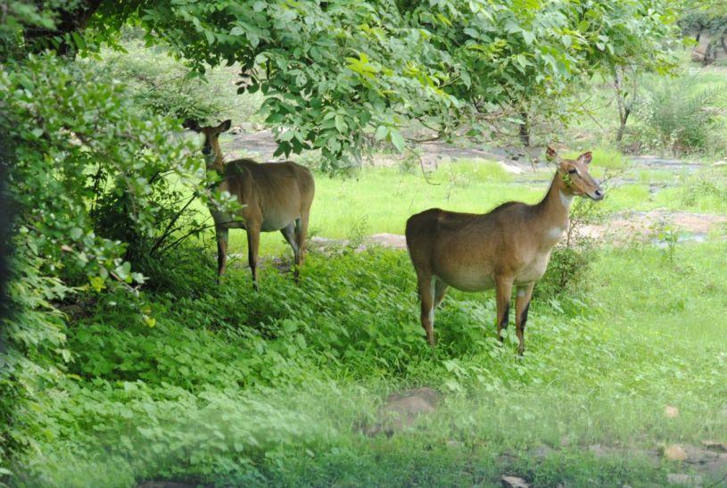 Shivpuri National Park
