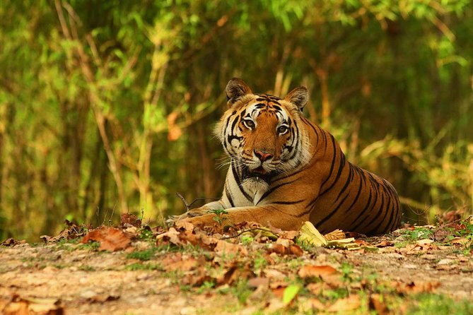 The Kanha Tiger Reserve